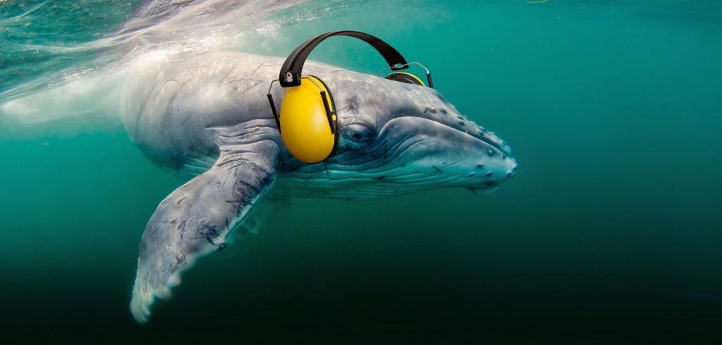 Foto: SpinasCivilVoices/OceanCare